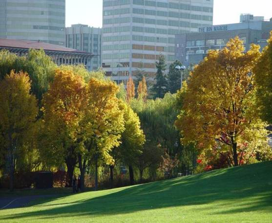 spokane urban forest