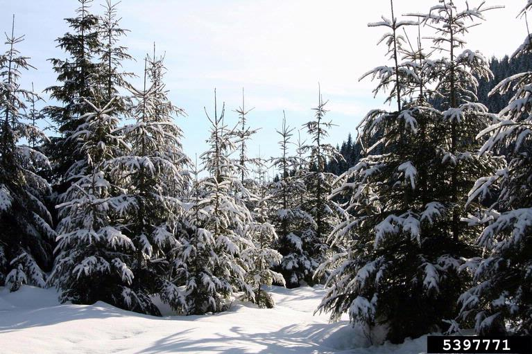how to prepare trees for winter