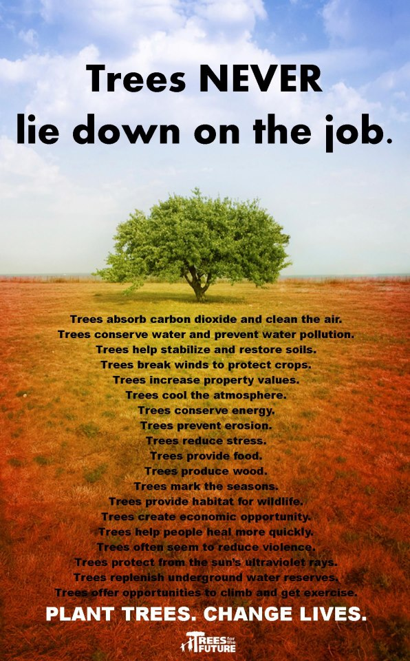 http://www.treesforthefuture.org/
