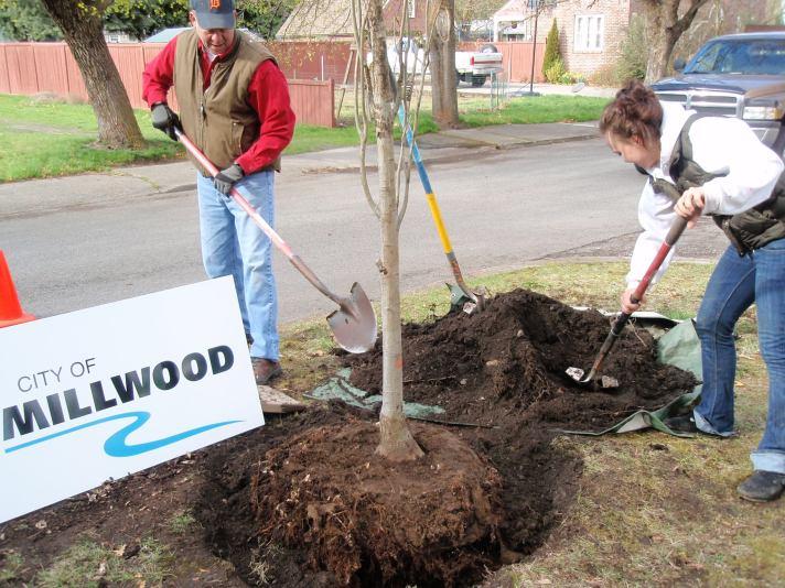 Millwood Mayor Dan Mork plants the 2013 Arbor Day tree, with assistance from Kaitlynn Davis