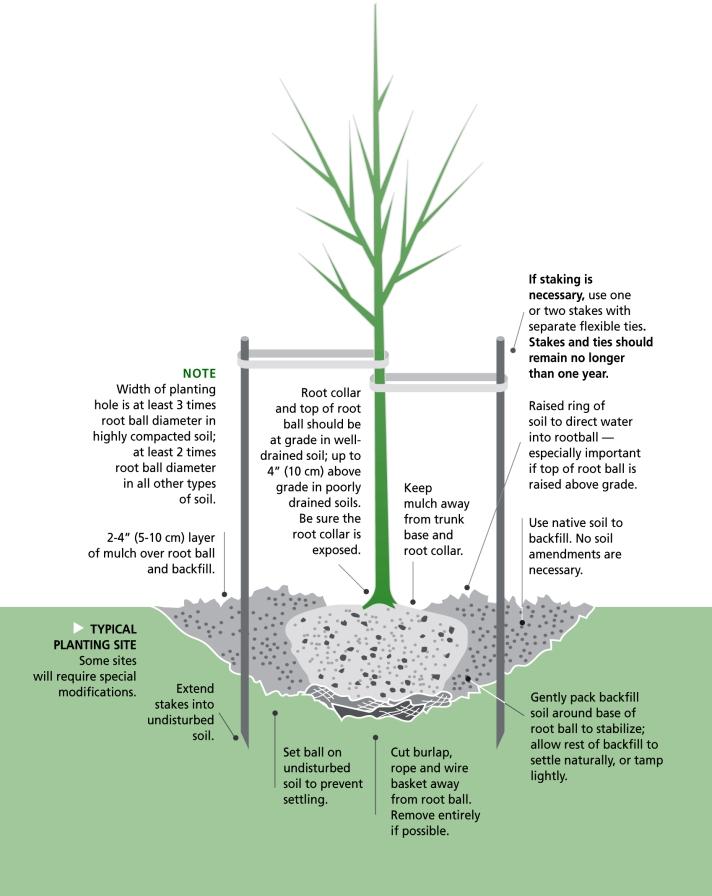 Planting-Tree-Illustration