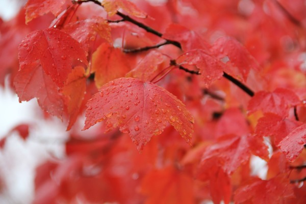 Apply now to be a Tree City USA! You don't want to miss out on the fall color. Photo: Janet Pearce/DNR