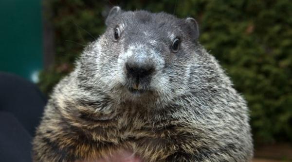 Groundhog photo, courtesy: NOAA